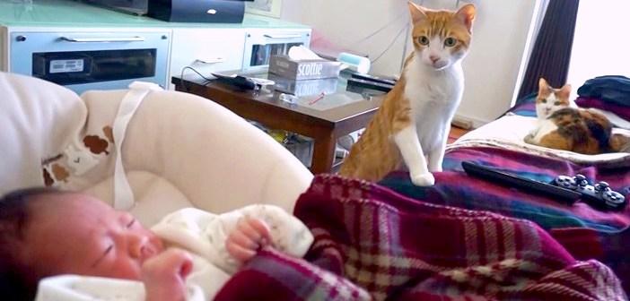 初めて見る赤ちゃんがどうしても気になる猫さん。ドキドキしながらも、そ〜っと様子をうかがう姿が可愛すぎる ( *´艸`)♡