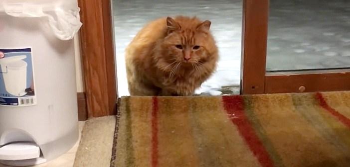 家に入る猫