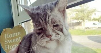 窓辺に座る猫