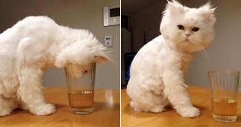水を飲もうとする猫
