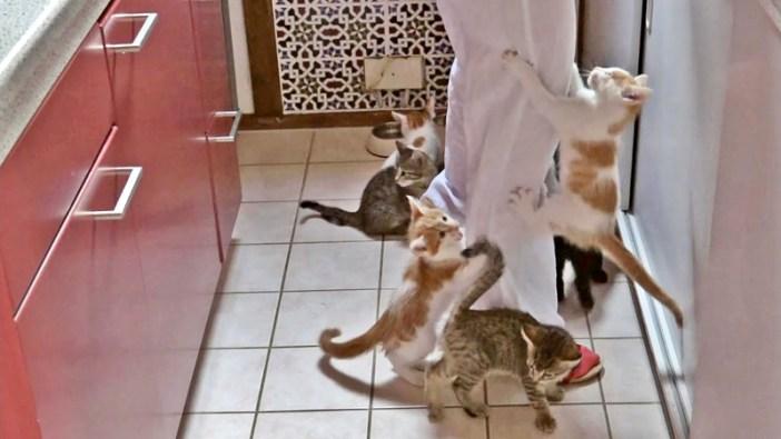 ご飯を求める子猫達