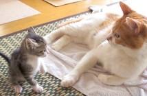 子猫と老猫