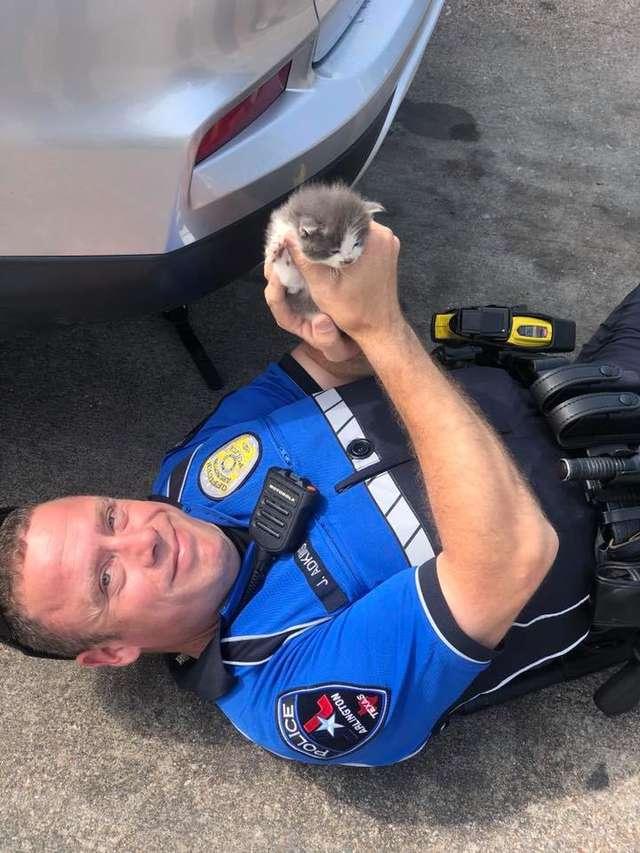 子猫を救った警察官