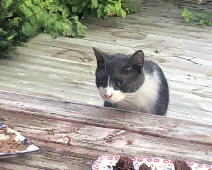 庭にきた猫