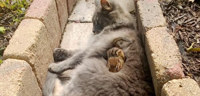 猫とリスが庭の中でバッタリ遭遇! 何故かすぐに意気投合し、そのまま友達に (*゚0゚)!