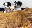 猫と子犬達