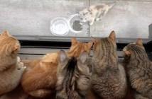 10匹の家猫と野良子猫