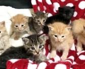 母猫と離ればなれになり、大きな声で鳴いていた7匹の子猫達。命を救ってくれた女性への素敵な恩返しに胸が熱くなる