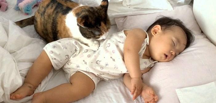 幸せいっぱいに赤ちゃんと添い寝する猫さん。ピッタリと寄り添いながら優しく毛づくろいする姿に、母親の愛情を感じる♡