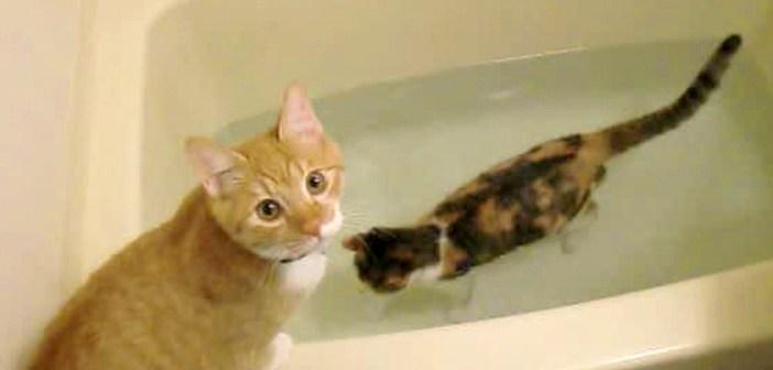 お風呂を楽しむ猫