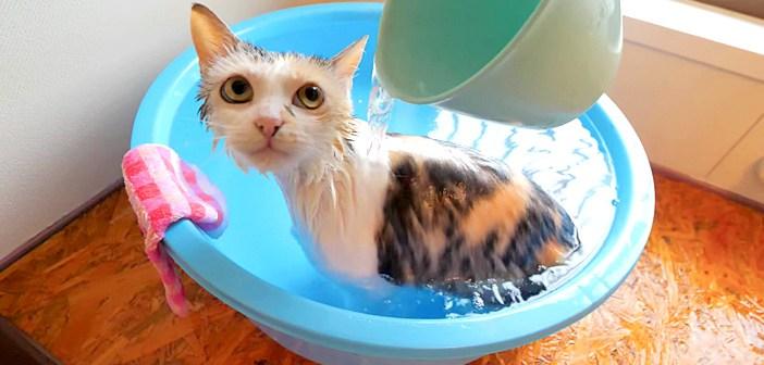 かけ湯が気持ち良くて極楽な猫さん。自ら湯船に入って、お風呂を全身で堪能する姿に心がポカポカ温まる (*´ω`*)♡