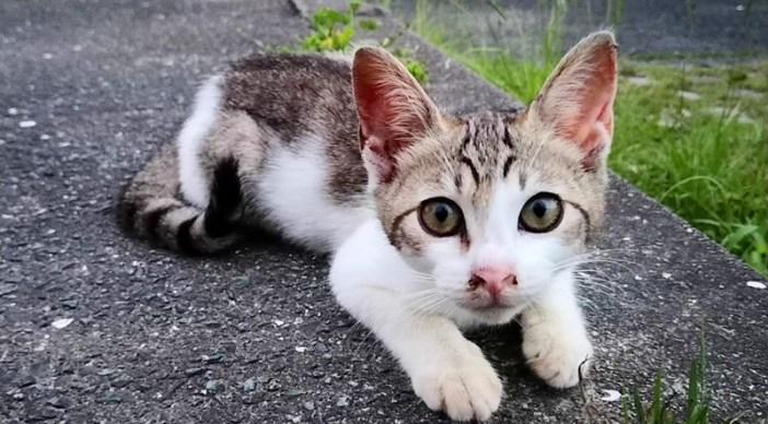 駐車場の子猫