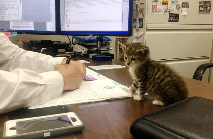 署長と子猫