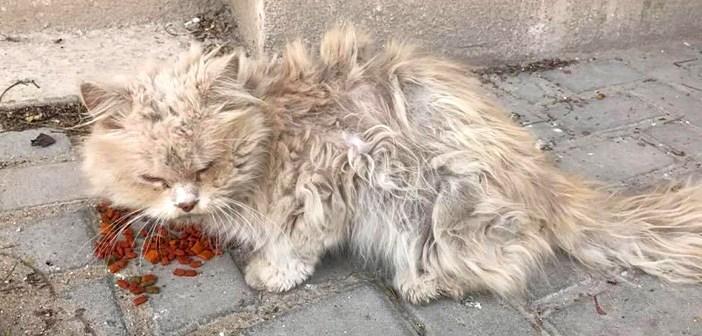 他の猫にいじめられ、とても臆病になっていた野良猫。人間の優しさに心を開くと、寄り添いながらたくさんの感謝を伝える