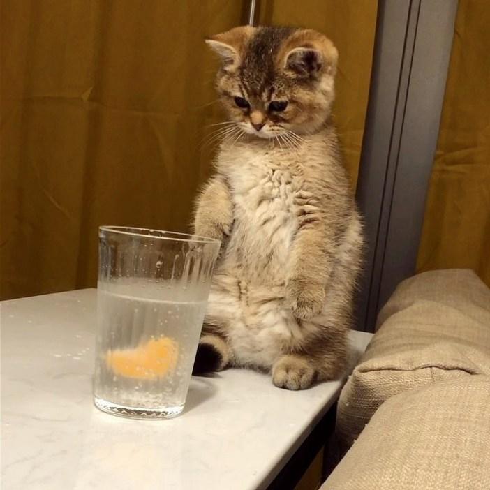 立ち上がる子猫