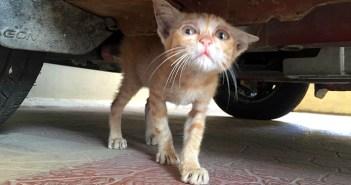 悲しそうな目をしながら、独りぼっちで車の下に隠れていた子猫。保護から6ヵ月後の幸せいっぱいの姿に心がホッと温まる