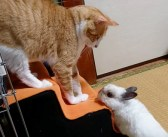 不法侵入した猫を発見したウサギ。猫のことをジーッと見つめ始めたと思ったら、とっても激しい行動に出た (*゚0゚)!