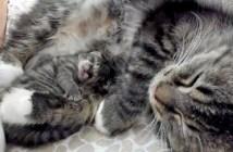 奇跡の子猫