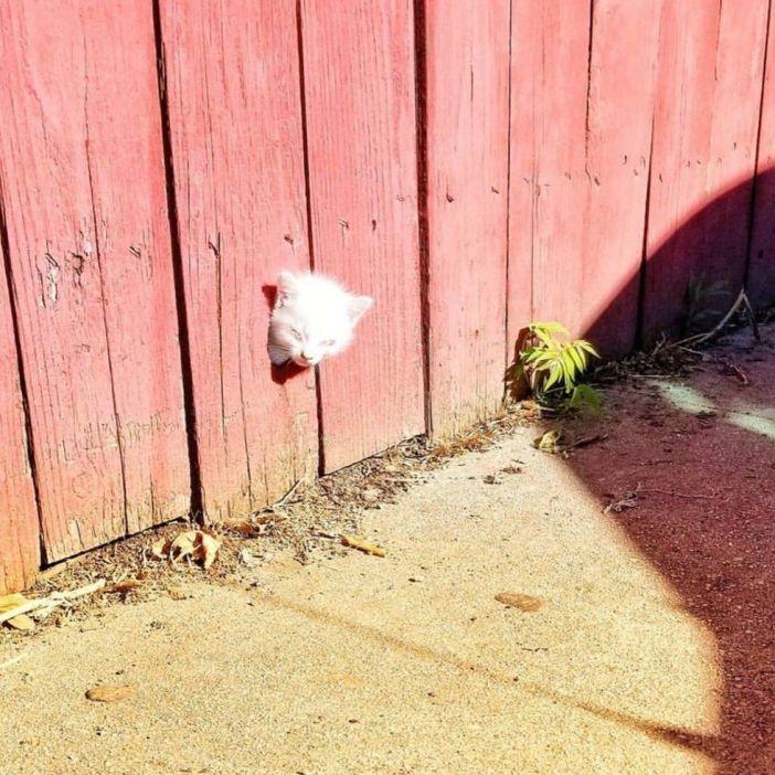 フェンスから子猫