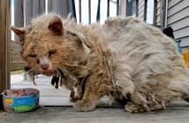 ボロボロの状態の猫