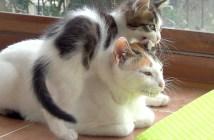 かまって攻撃する子猫
