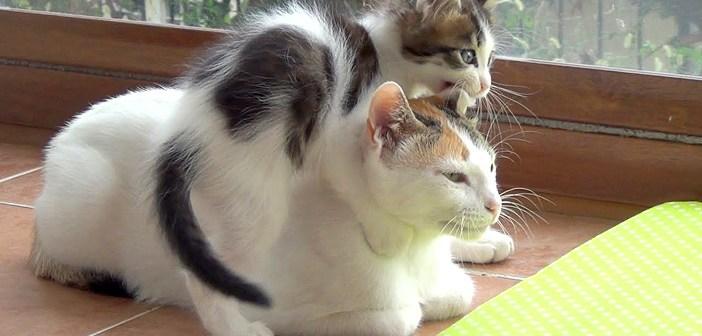部屋中をところ狭しと駆け回る、元気過ぎる5匹の子猫。そんな子猫達に何をされても怒らない母猫に大きな愛情を感じる♡