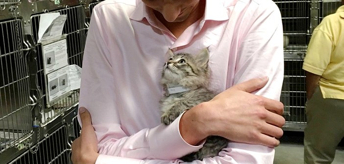男性と子猫の出会い