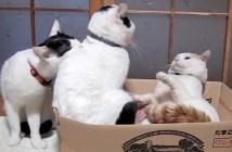 ケンカを止める猫