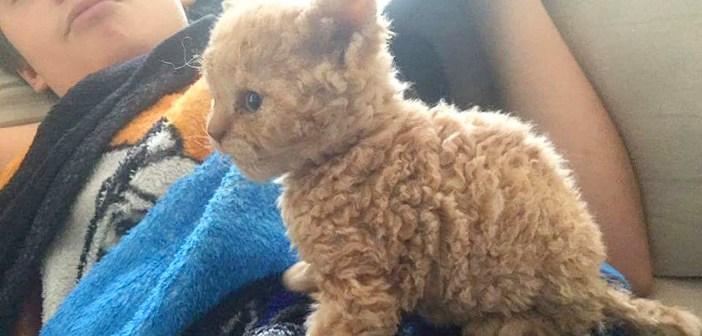 巻き毛の子猫