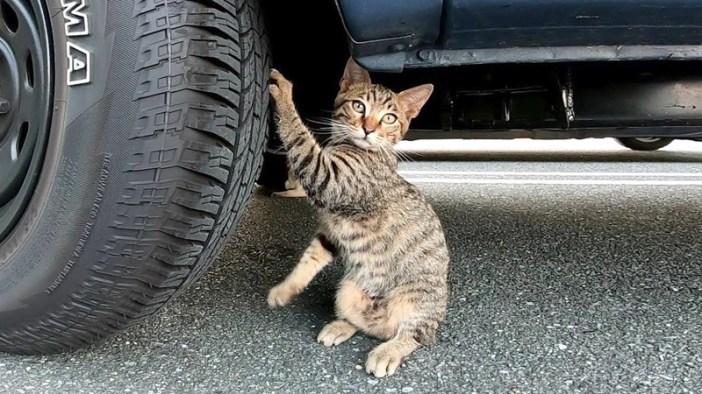 タイヤで爪研ぎをする猫