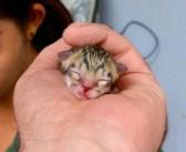 道路の真ん中でうずくまっていた幼い子猫を保護。でもそれは普通の子猫ではありませんでした!