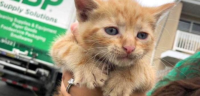 整備工場のトレーラーの下で発見された子猫達。優しい従業員によって助け出され、安全な場所で幸せな毎日を送り始める