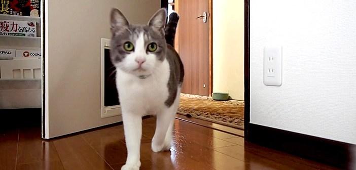 呼べば現れる猫さん
