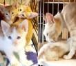 保護された猫の親子