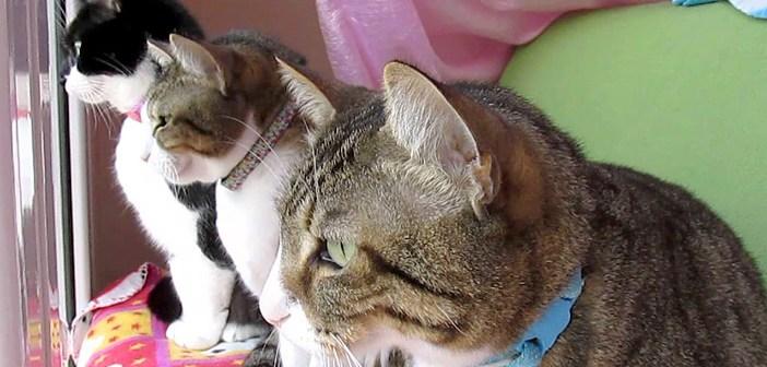鳥を見つめる猫達