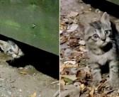 「助けてくれるの?」デッキの下から現れた1匹の子猫。後に続いて兄弟も次々と現れ、安全な家の中で新しい人生を始める