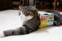 箱を着る猫さん