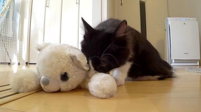 子猫とヌイグルミ