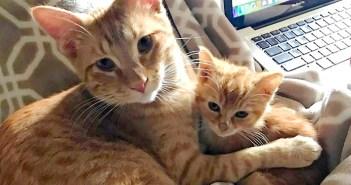 父猫と子猫