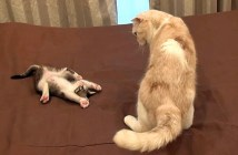 かまえる子猫