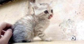 窓の外で鳴いていた子猫