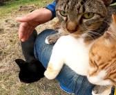 次々と膝の上に乗ってきて、猛烈に甘え始めた野良猫達。幸せいっぱいの喉のゴロゴロ音が大変なことに ( *´艸`)♡
