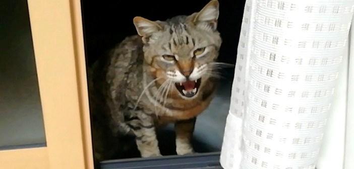 家に来る猫
