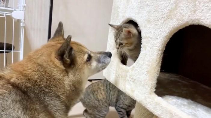近づく犬と子猫