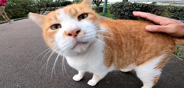 モフモフ好きの猫