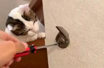 作業を見つめる猫