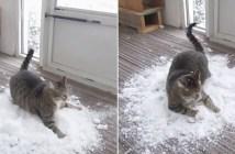 雪で遊ぶ猫