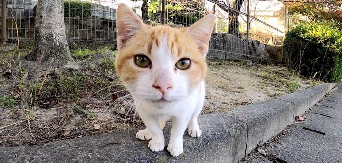 無邪気な子猫が愛らしい声で話しかけてきた! ちょっとドキドキしながらも、何度も近づいてくる様子が可愛い ( *´艸`)♡