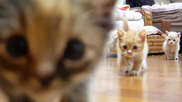 歩き回る子猫達