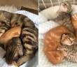 再会した母猫と子猫達
